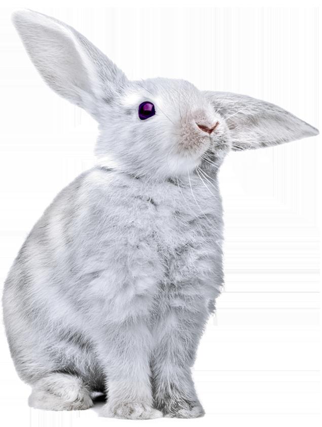 Rabbit-3d